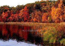 immagine autunno
