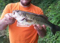 Bass Catturato a Wacky