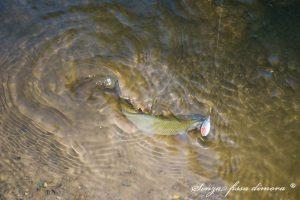 fine agosto pesca_1