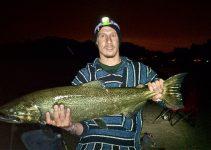 Salmone Chinook