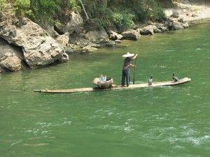 A pesca con i cormorani