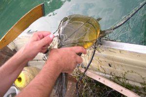 Pesca con le reti