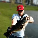 Bass Lino