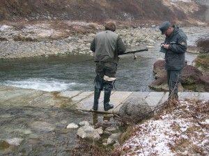 Vigilanza ittica