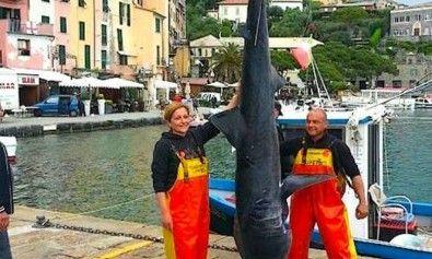 cucciolo-di-squalo-elefante-catturato-in-liguria