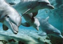 delfini-maui