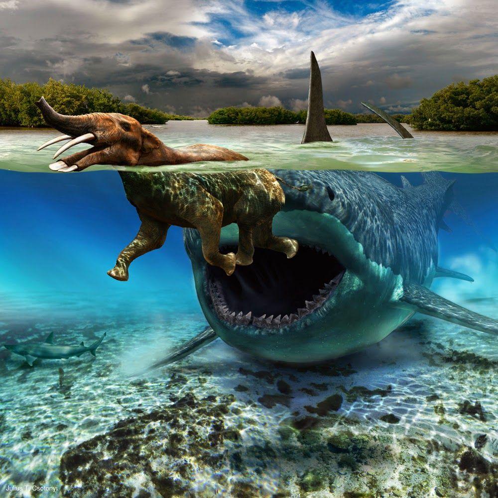Le migliori bufale sugli squali il blog della pesca for Immagini squali da colorare