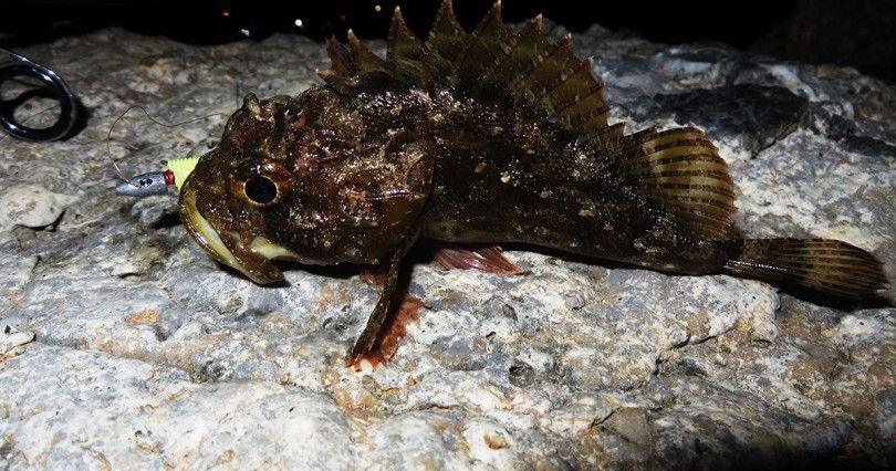Scorfano bruno - Light rock fishing