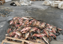 carpe-sequestrate-a-pescatori-di-frodo