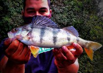 Persico reale in street fishing