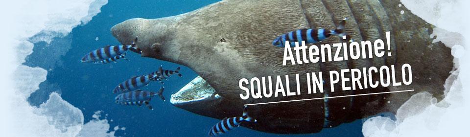 in difesa degli squali