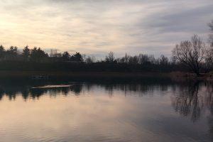 Lago airone