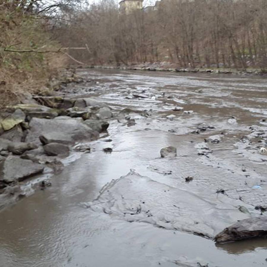 Svuotata la diga di creva moria di pesci nel fiume tresa for Pesci di fiume