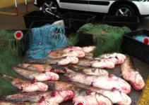rovigo-pesca-abusiva