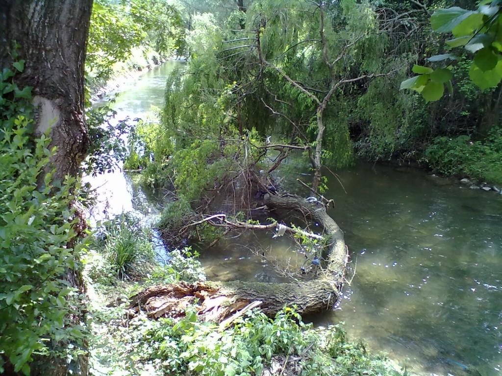 albero caduto nella corrente