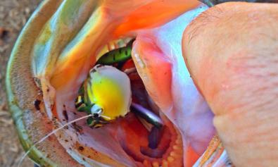 pesca a rana