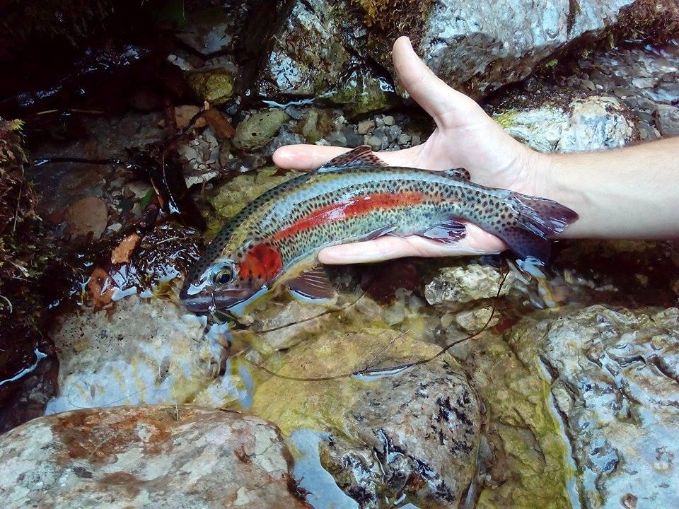 pesca alla trota in friuli venezia giulia